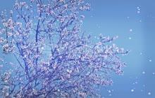 footage_primavera